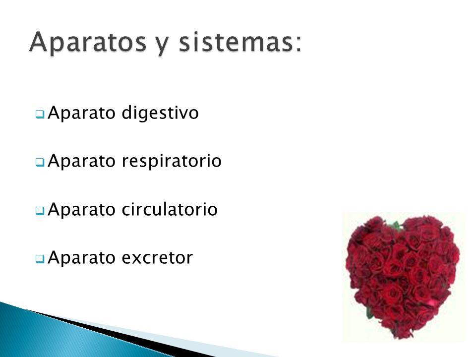 Aparato digestivo Aparato respiratorio Aparato circulatorio Aparato excretor