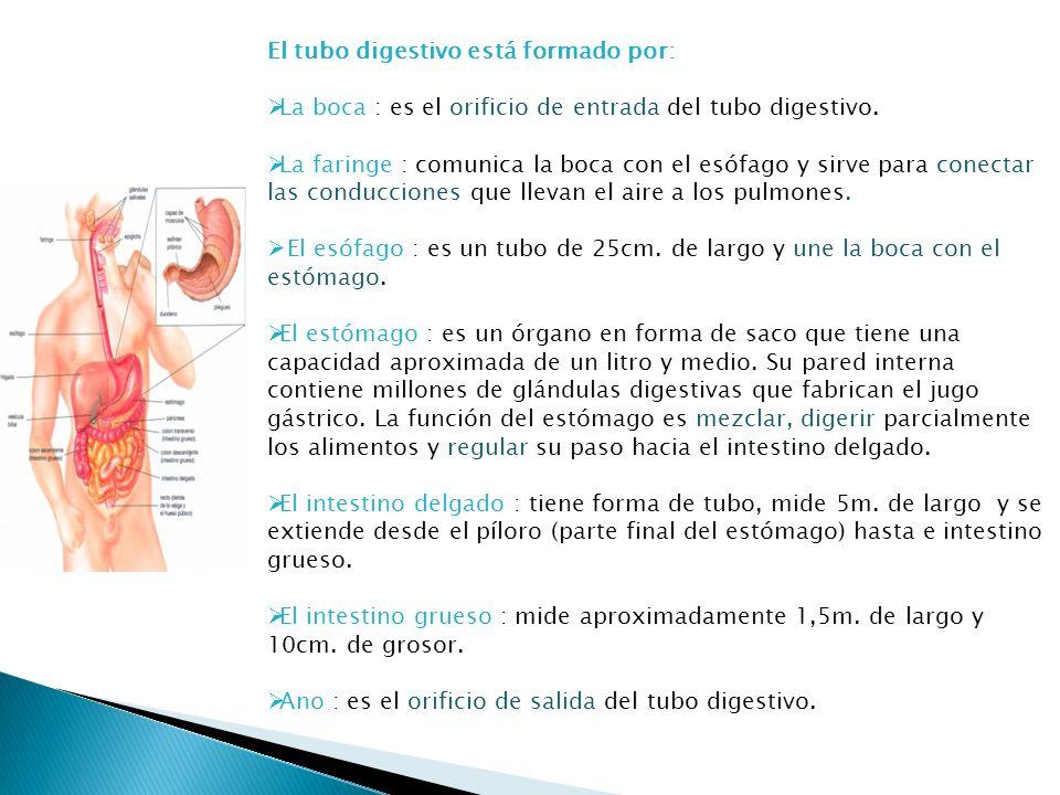 El tubo digestivo está formado por: La boca : es el orificio de entrada del tubo digestivo. La faringe : comunica la boca con el esófago y sirve para