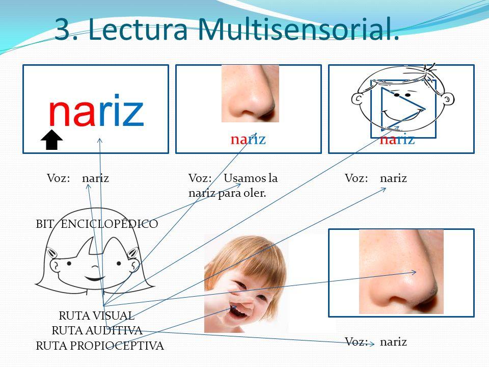 3. Lectura Multisensorial. nariz Voz: narizVoz: Usamos la nariz para oler. Voz: nariz nariz Voz: nariz RUTA VISUAL RUTA AUDITIVA RUTA PROPIOCEPTIVA BI