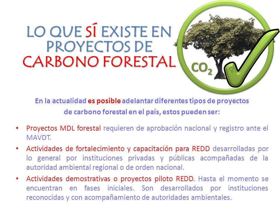 En la actualidad es posible adelantar diferentes tipos de proyectos de carbono forestal en el país, estos pueden ser: Proyectos MDL forestal requieren de aprobación nacional y registro ante el MAVDT.