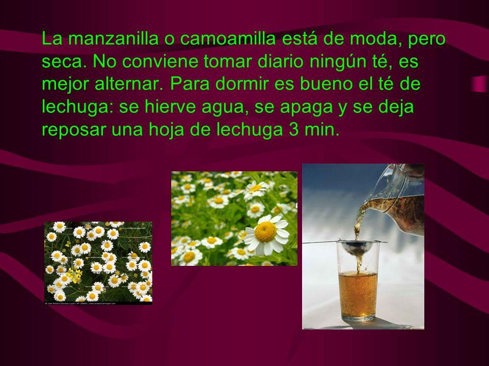 La manzanilla o camoamilla está de moda, pero seca. No conviene tomar diario ningún té, es mejor alternar. Para dormir es bueno el té de lechuga: se h