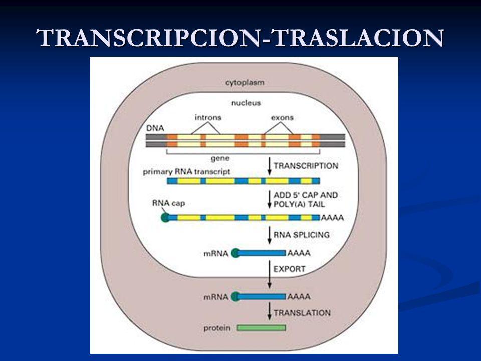 TRANSCRIPCION-TRASLACION