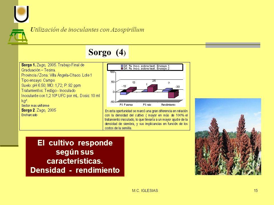 Utilización de inoculantes con Azospirillum M.C. IGLESIAS15 Sorgo (4 ) El cultivo responde según sus características. Densidad - rendimiento