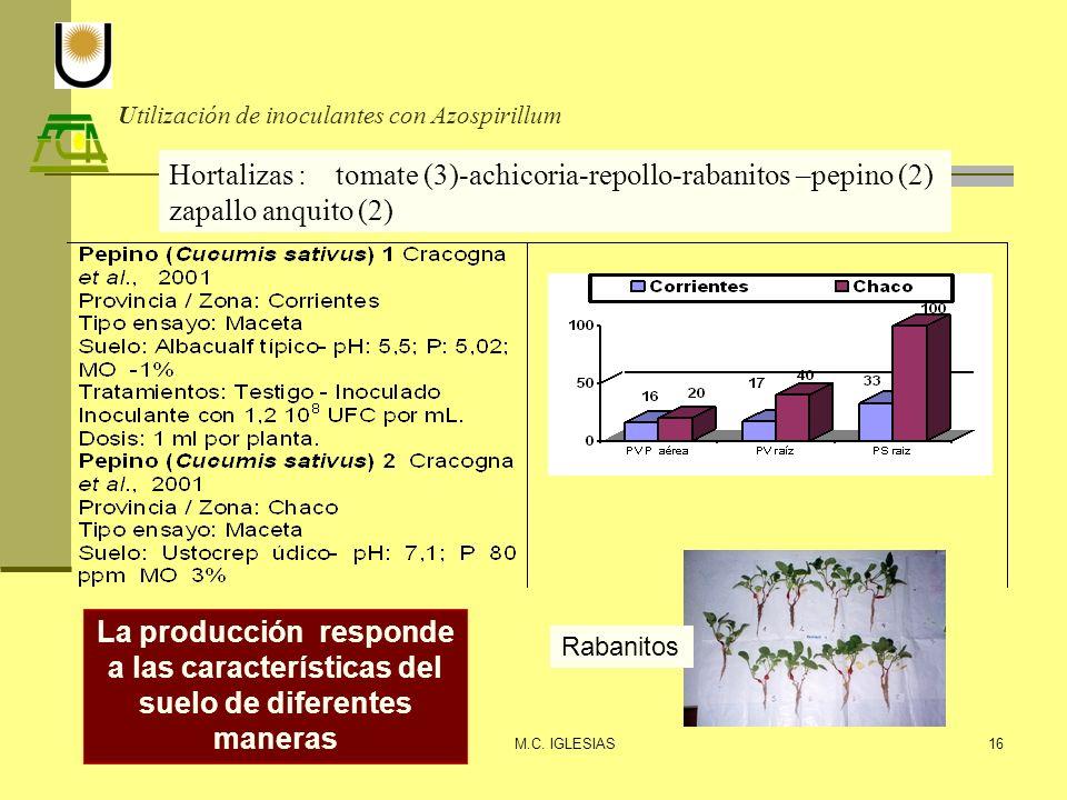 Utilización de inoculantes con Azospirillum M.C. IGLESIAS16 Hortalizas : tomate (3)-achicoria-repollo-rabanitos –pepino (2) zapallo anquito (2) Rabani