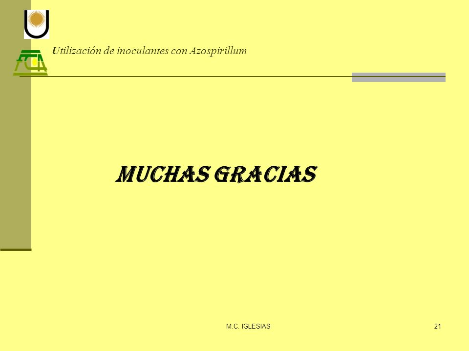 Utilización de inoculantes con Azospirillum M.C. IGLESIAS21 Muchas Gracias