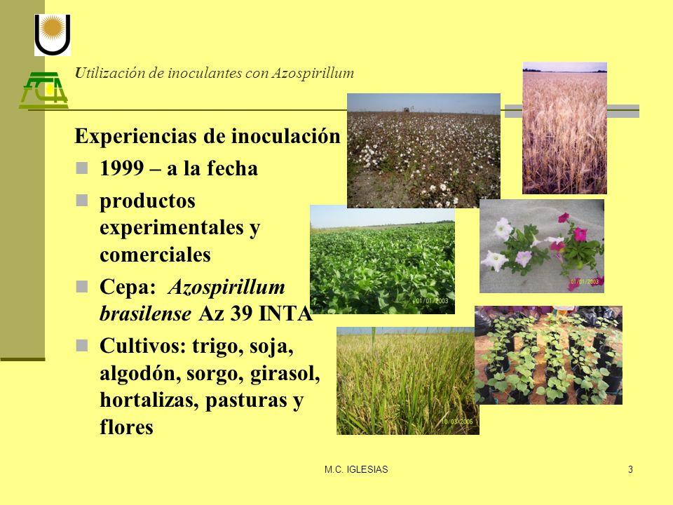 Utilización de inoculantes con Azospirillum Experiencias de inoculación 1999 – a la fecha productos experimentales y comerciales Cepa: Azospirillum br