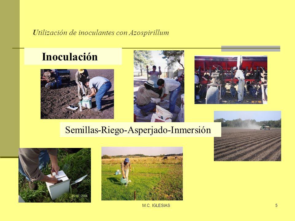 Utilización de inoculantes con Azospirillum M.C. IGLESIAS5 Inoculación Semillas-Riego-Asperjado-Inmersión