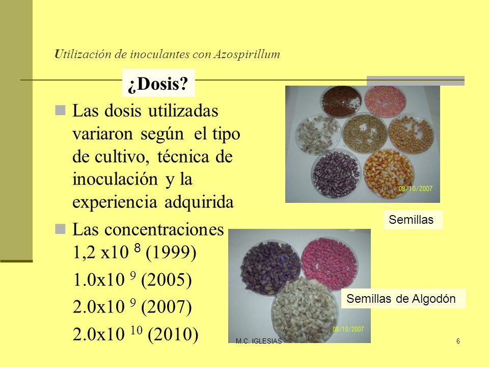 Utilización de inoculantes con Azospirillum Controles y evaluaciones ¿Qué.