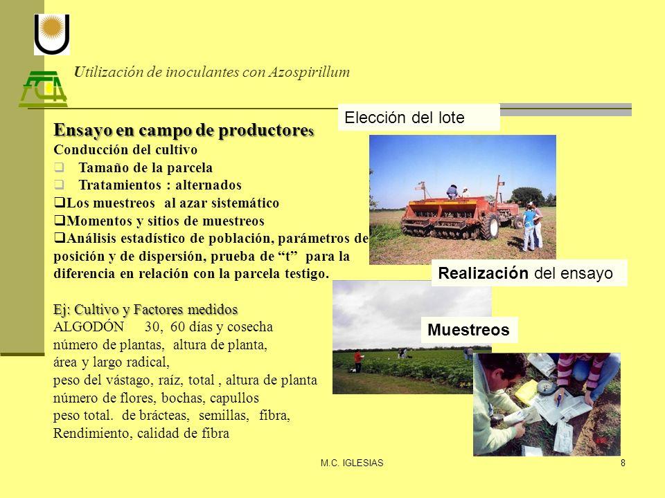 Utilización de inoculantes con Azospirillum M.C. IGLESIAS8 Elección del lote Realización del ensayo Ensayo en campo de productore s Conducción del cul
