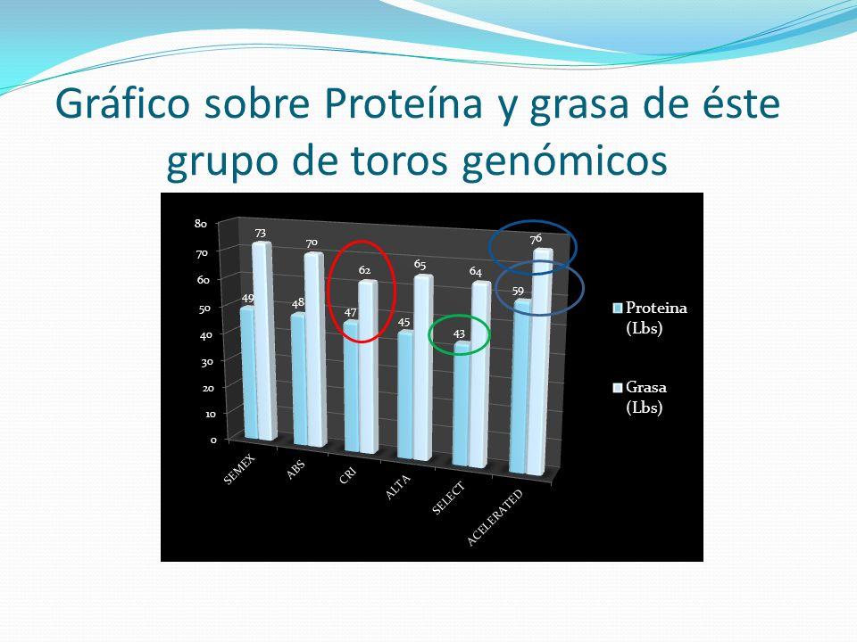 Gráfico sobre Proteína y grasa de éste grupo de toros genómicos