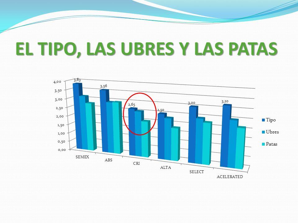 EL TIPO, LAS UBRES Y LAS PATAS