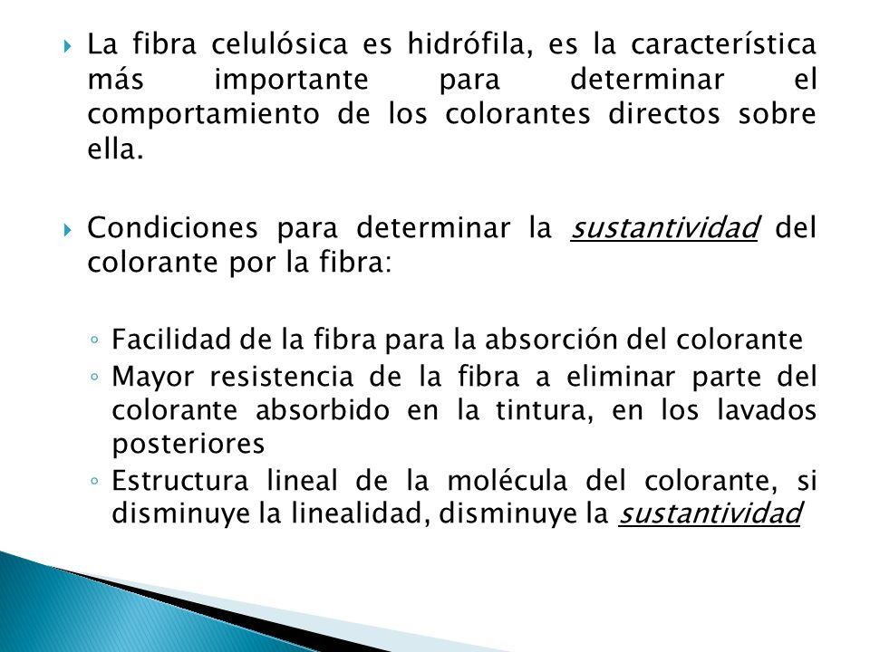La fibra celulósica es hidrófila, es la característica más importante para determinar el comportamiento de los colorantes directos sobre ella. Condici