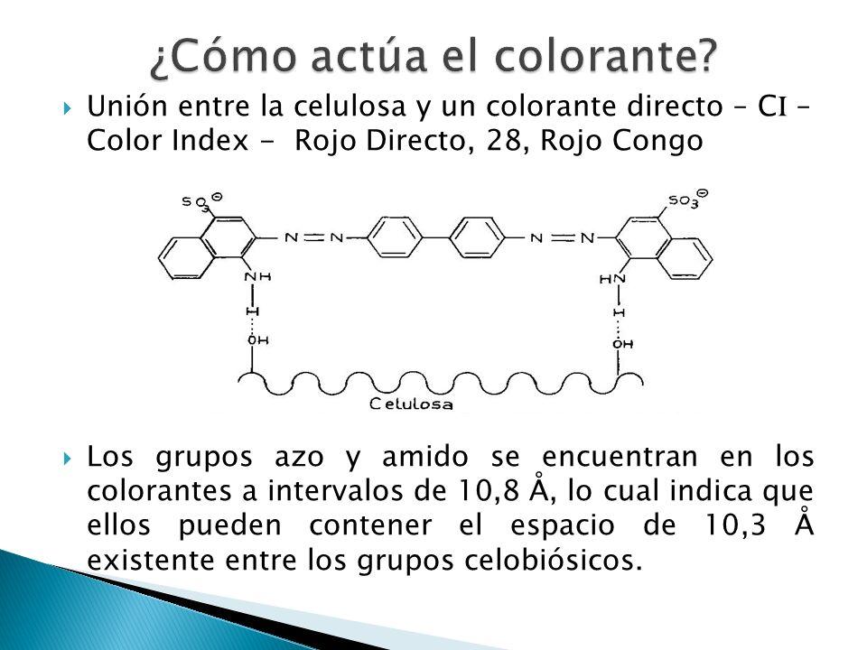 Unión entre la celulosa y un colorante directo – C I – Color Index - Rojo Directo, 28, Rojo Congo Los grupos azo y amido se encuentran en los colorant