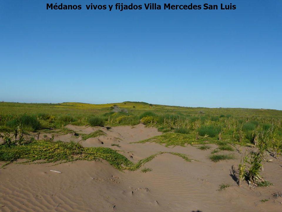 Médanos vivos y fijados Villa Mercedes San Luis