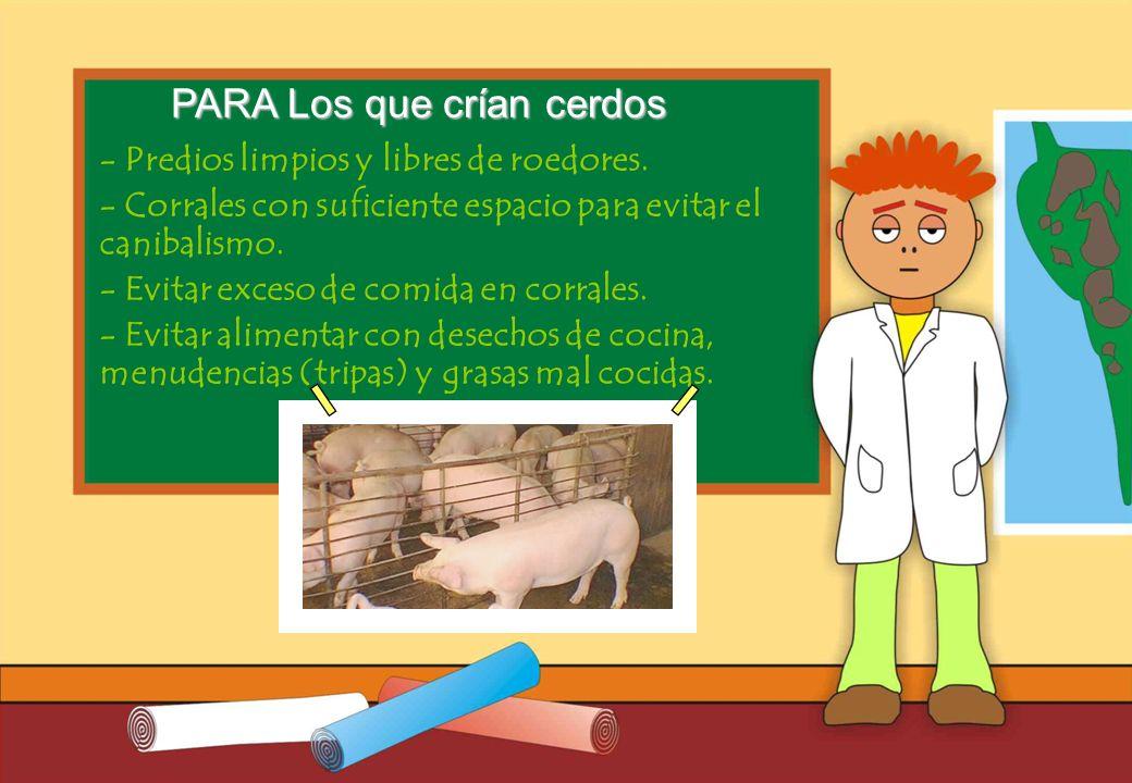Realizado por Ricardo Bruno – Marzo de 2010 - Predios limpios y libres de roedores.