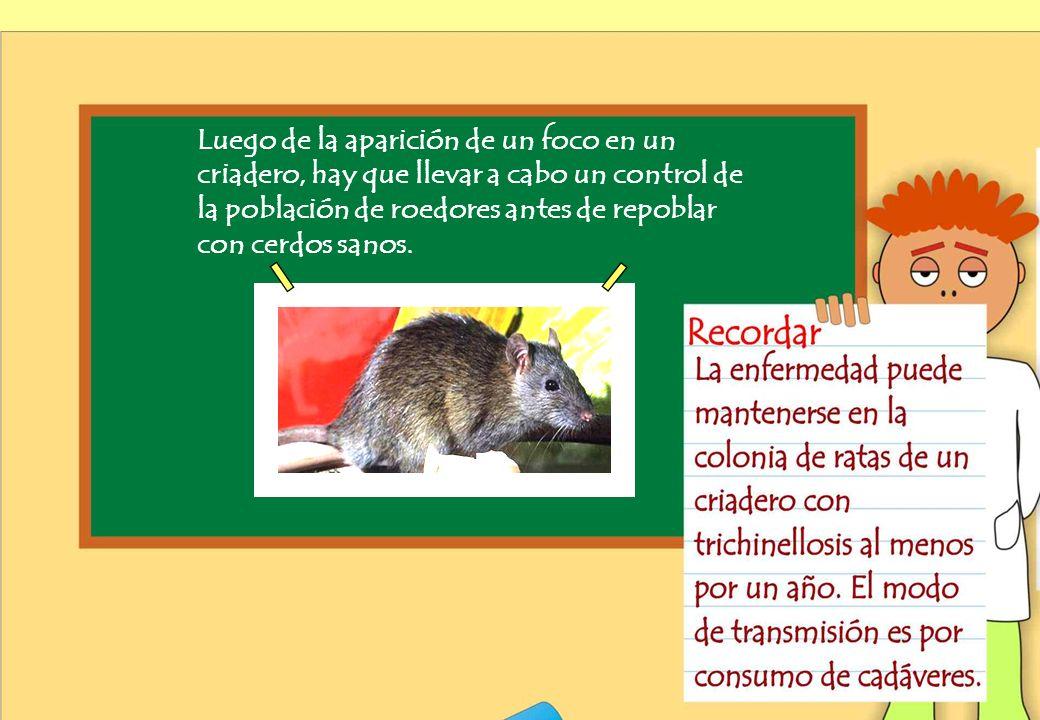 Realizado por Ricardo Bruno – Marzo de 2010 Luego de la aparición de un foco en un criadero, hay que llevar a cabo un control de la población de roedores antes de repoblar con cerdos sanos.