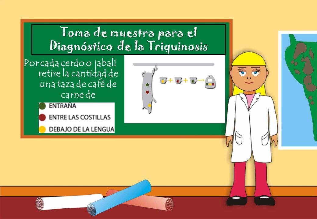 Realizado por Ricardo Bruno – Marzo de 2010 Por cada cerdo o jabalí retire la cantidad de una taza de café de carne de Toma de muestra para el Diagnóstico de la Triquinosis