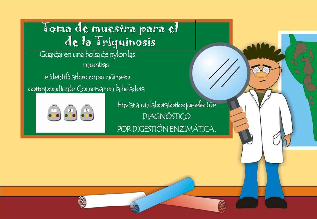 Realizado por Ricardo Bruno – Marzo de 2010 Toma de muestra para el de la Triquinosis Guardar en una bolsa de nylon las muestras e identificarlos con su número correspondiente.