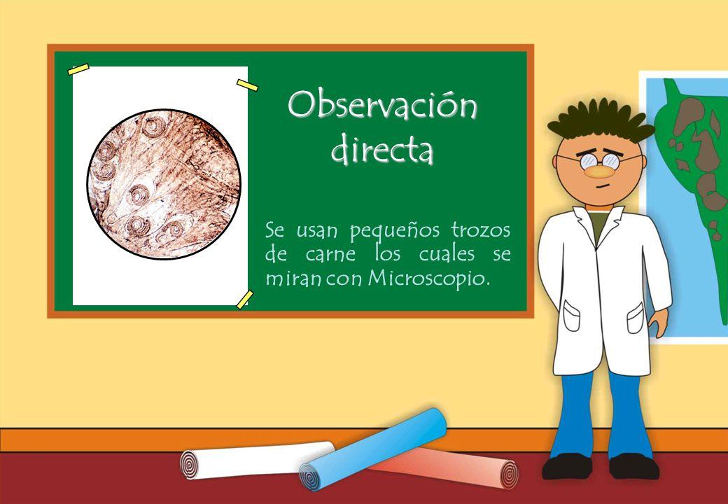 Realizado por Ricardo Bruno – Marzo de 2010 Se usan pequeños trozos de carne los cuales se miran con Microscopio.