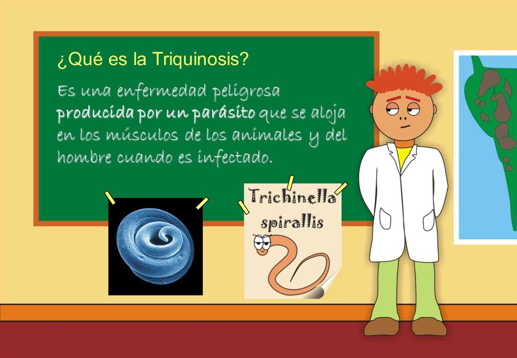 Realizado por Ricardo Bruno – Marzo de 2010 Es una enfermedad peligrosa producida por un parásito que se aloja en los músculos de los animales y del hombre cuando es infectado.