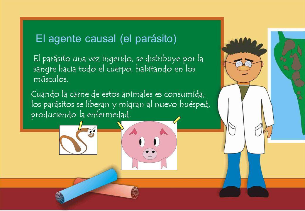 Realizado por Ricardo Bruno – Marzo de 2010 El parásito una vez ingerido, se distribuye por la sangre hacia todo el cuerpo, habitando en los músculos.