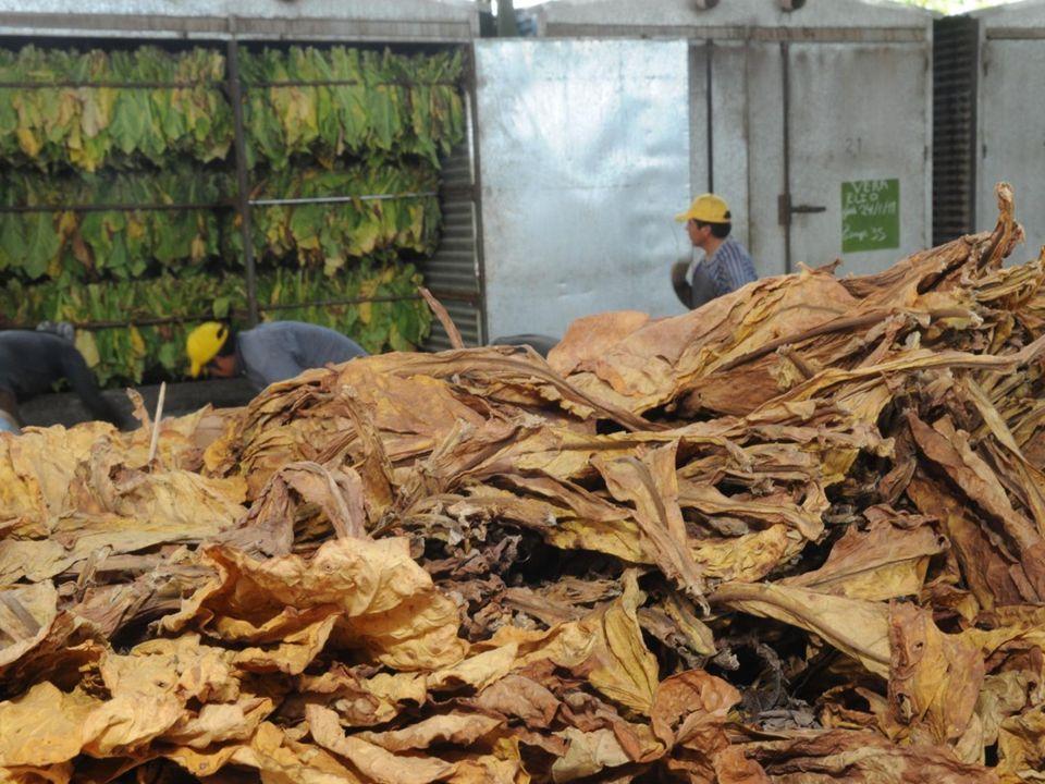 Una tradición de 40 años Desde los años 70 en que se implementaron las primeras guarderías rurales para los hijos de los obreros en tiempo de cosecha