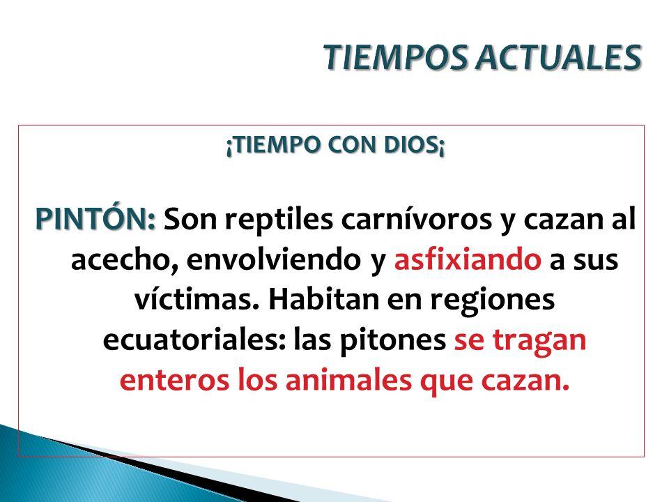 ¡TIEMPO CON DIOS¡ PINTÓN: PINTÓN: Son reptiles carnívoros y cazan al acecho, envolviendo y asfixiando a sus víctimas. Habitan en regiones ecuatoriales