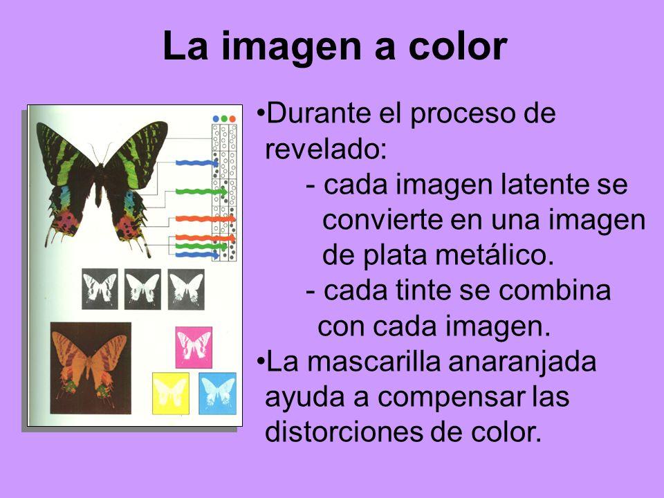 La imagen a color Durante el proceso de revelado: - cada imagen latente se convierte en una imagen de plata metálico. - cada tinte se combina con cada