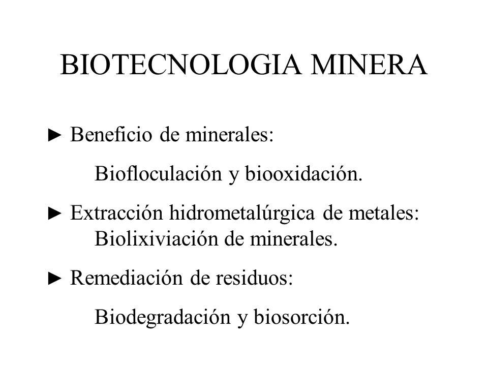 BIOTECNOLOGIA MINERA Beneficio de minerales: Biofloculación y biooxidación. Extracción hidrometalúrgica de metales: Biolixiviación de minerales. Remed