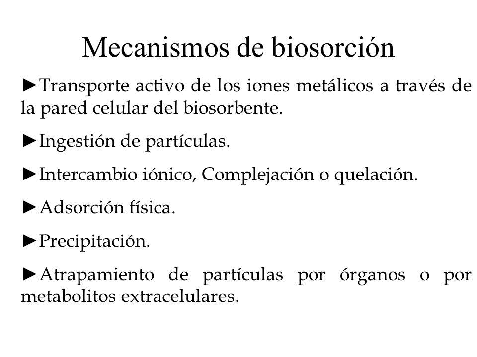 Mecanismos de biosorción Transporte activo de los iones metálicos a través de la pared celular del biosorbente. Ingestión de partículas. Intercambio i