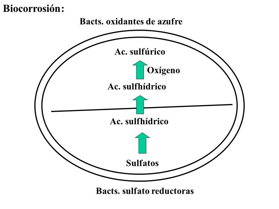 Sulfatos Ac. sulfhídrico Ac. sulfúrico Oxígeno Bacts. oxidantes de azufre Bacts. sulfato reductoras Biocorrosión: