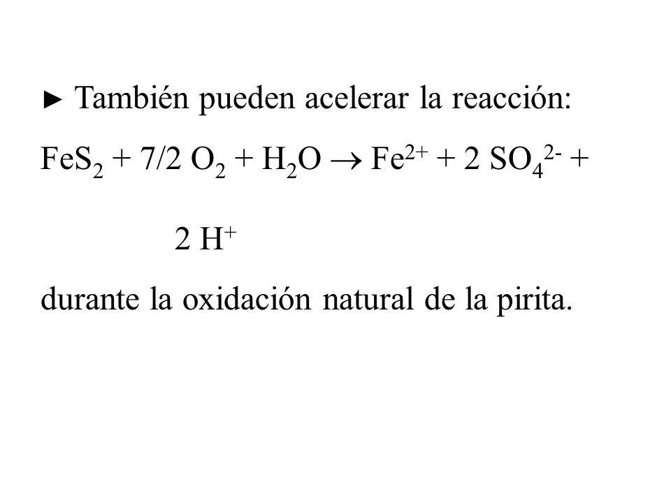También pueden acelerar la reacción: FeS 2 + 7/2 O 2 + H 2 O Fe 2+ + 2 SO 4 2- + 2 H + durante la oxidación natural de la pirita.