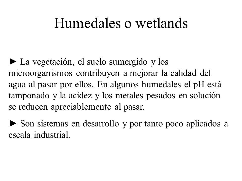 Humedales o wetlands La vegetación, el suelo sumergido y los microorganismos contribuyen a mejorar la calidad del agua al pasar por ellos. En algunos