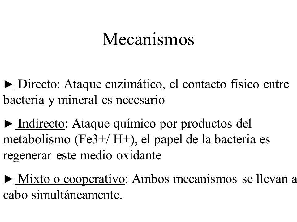 Mecanismos Directo: Ataque enzimático, el contacto físico entre bacteria y mineral es necesario Indirecto: Ataque químico por productos del metabolism