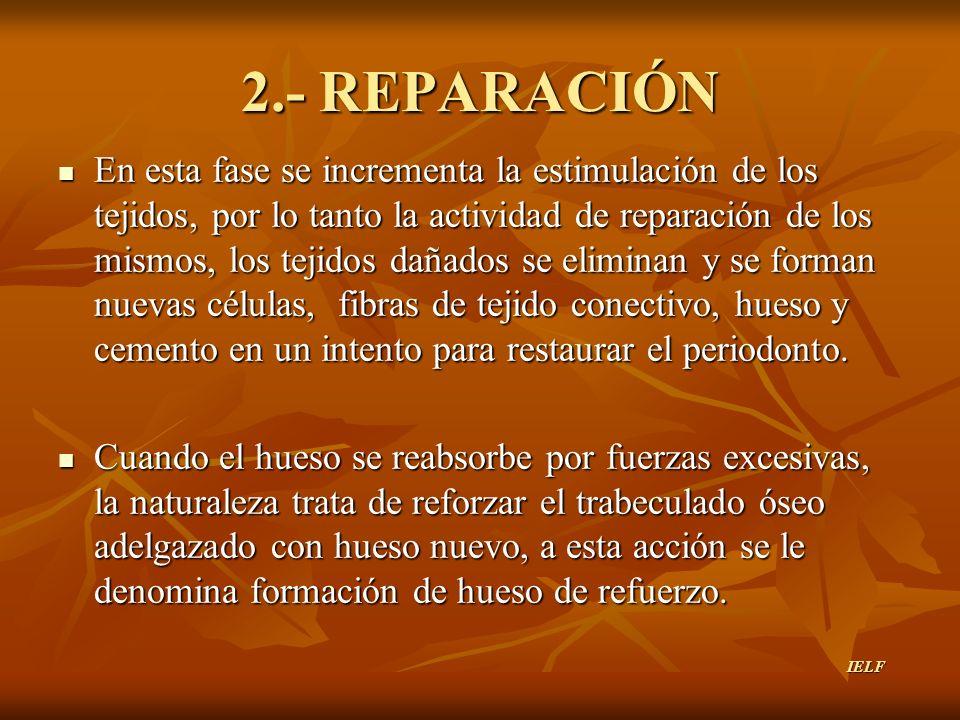 2.- REPARACIÓN En esta fase se incrementa la estimulación de los tejidos, por lo tanto la actividad de reparación de los mismos, los tejidos dañados s