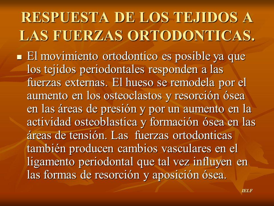 RESPUESTA DE LOS TEJIDOS A LAS FUERZAS ORTODONTICAS. El movimiento ortodontico es posible ya que los tejidos periodontales responden a las fuerzas ext