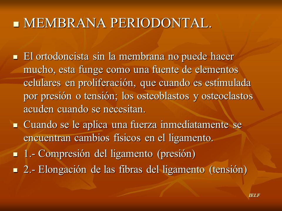 MEMBRANA PERIODONTAL. MEMBRANA PERIODONTAL. El ortodoncista sin la membrana no puede hacer mucho, esta funge como una fuente de elementos celulares en