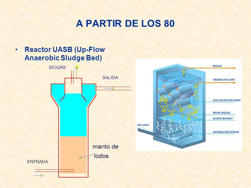 A PARTIR DE LOS 80 Reactor UASB (Up-Flow Anaerobic Sludge Bed) manto de lodos ENTRADA BIOG Á S SALIDA manto de lodos