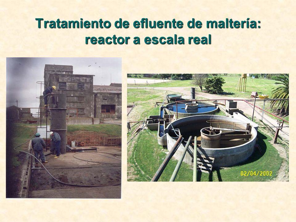 Tratamiento de efluente de maltería: reactor a escala real