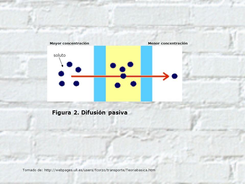 Figura 2. Difusión pasiva soluto Mayor concentraciónMenor concentración Tomado de: http://webpages.ull.es/users/fcorzo/transporte/Teoriabasica.htm
