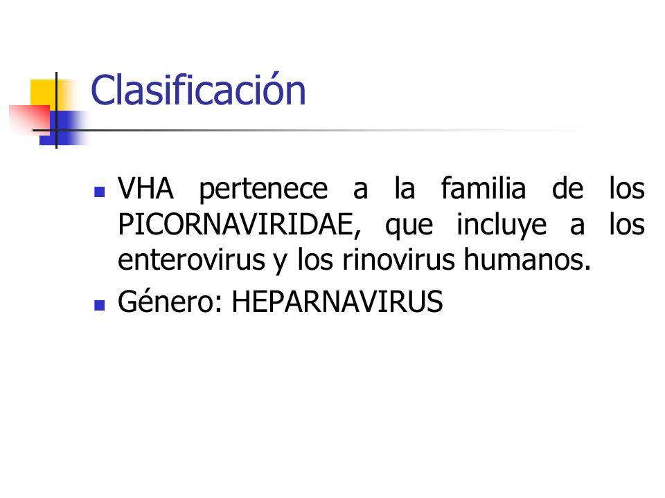 Clasificación VHA pertenece a la familia de los PICORNAVIRIDAE, que incluye a los enterovirus y los rinovirus humanos. Género: HEPARNAVIRUS