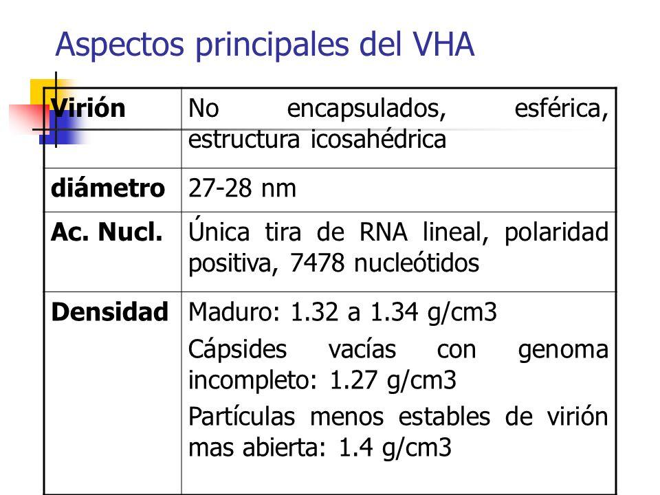 Aspectos principales del VHA ViriónNo encapsulados, esférica, estructura icosahédrica diámetro27-28 nm Ac. Nucl.Única tira de RNA lineal, polaridad po