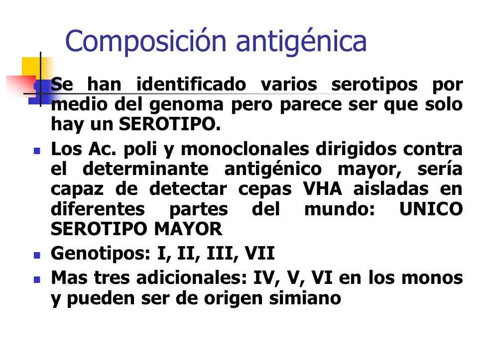 Composición antigénica Se han identificado varios serotipos por medio del genoma pero parece ser que solo hay un SEROTIPO. Los Ac. poli y monoclonales