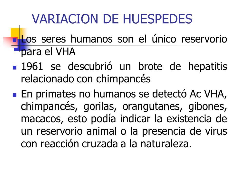VARIACION DE HUESPEDES Los seres humanos son el único reservorio para el VHA 1961 se descubrió un brote de hepatitis relacionado con chimpancés En pri