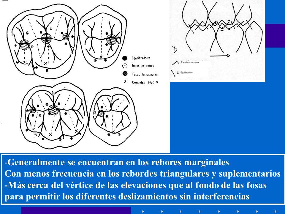 INTRODUCCION A LA OCLUSION -Generalmente se encuentran en los rebores marginales Con menos frecuencia en los rebordes triangulares y suplementarios -Más cerca del vértice de las elevaciones que al fondo de las fosas para permitir los diferentes deslizamientos sin interferencias