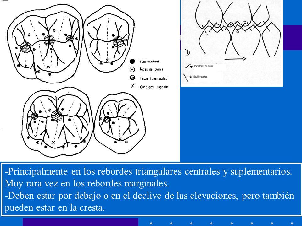 INTRODUCCION A LA OCLUSION -Principalmente en los rebordes triangulares centrales y suplementarios.