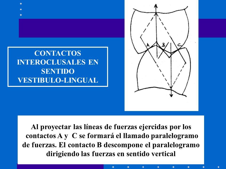 CONTACTOS INTEROCLUSALES EN SENTIDO VESTIBULO-LINGUAL Al proyectar las líneas de fuerzas ejercidas por los contactos A y C se formará el llamado paralelogramo de fuerzas.