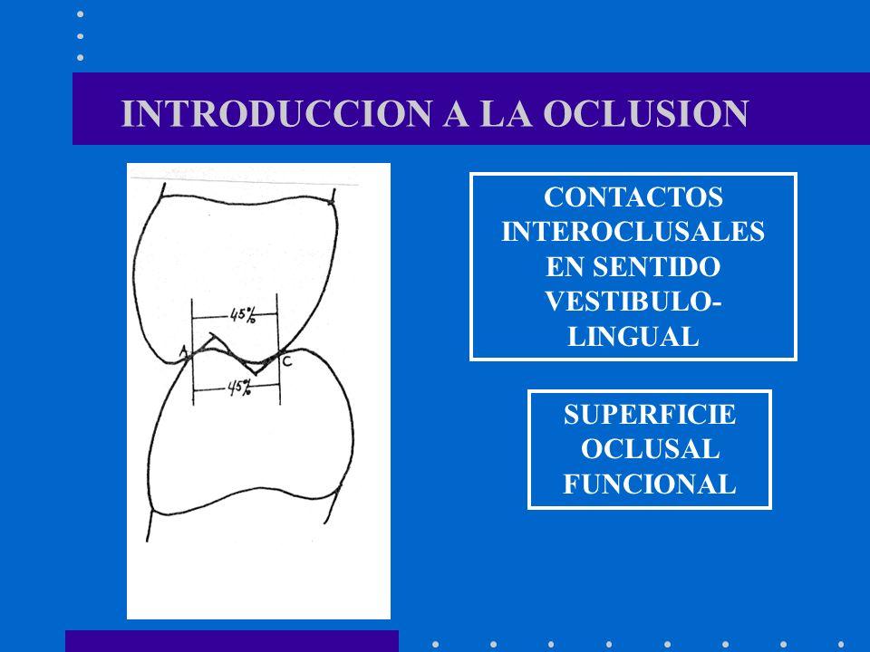 INTRODUCCION A LA OCLUSION CONTACTOS INTEROCLUSALES EN SENTIDO VESTIBULO- LINGUAL SUPERFICIE OCLUSAL FUNCIONAL