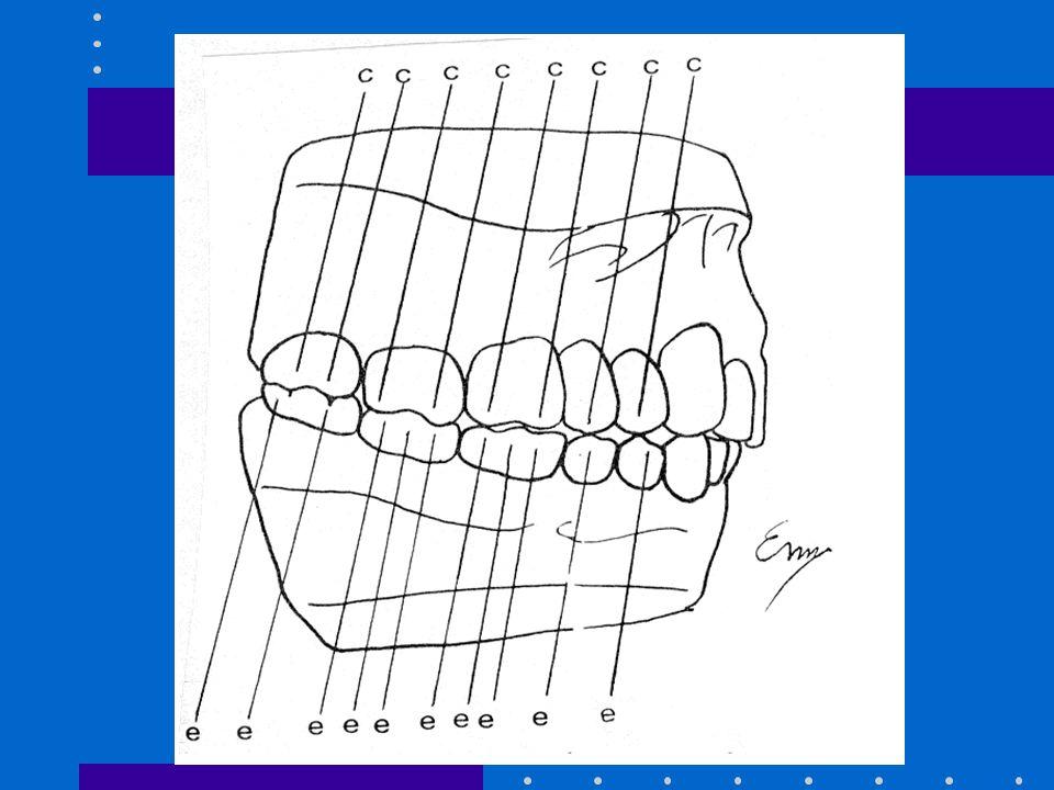 INTRODUCCION A LA OCLUSION Los equilibradores se oponen al componente anterior de la fuerza en el maxilar pero contribuyen a él en la mandibula
