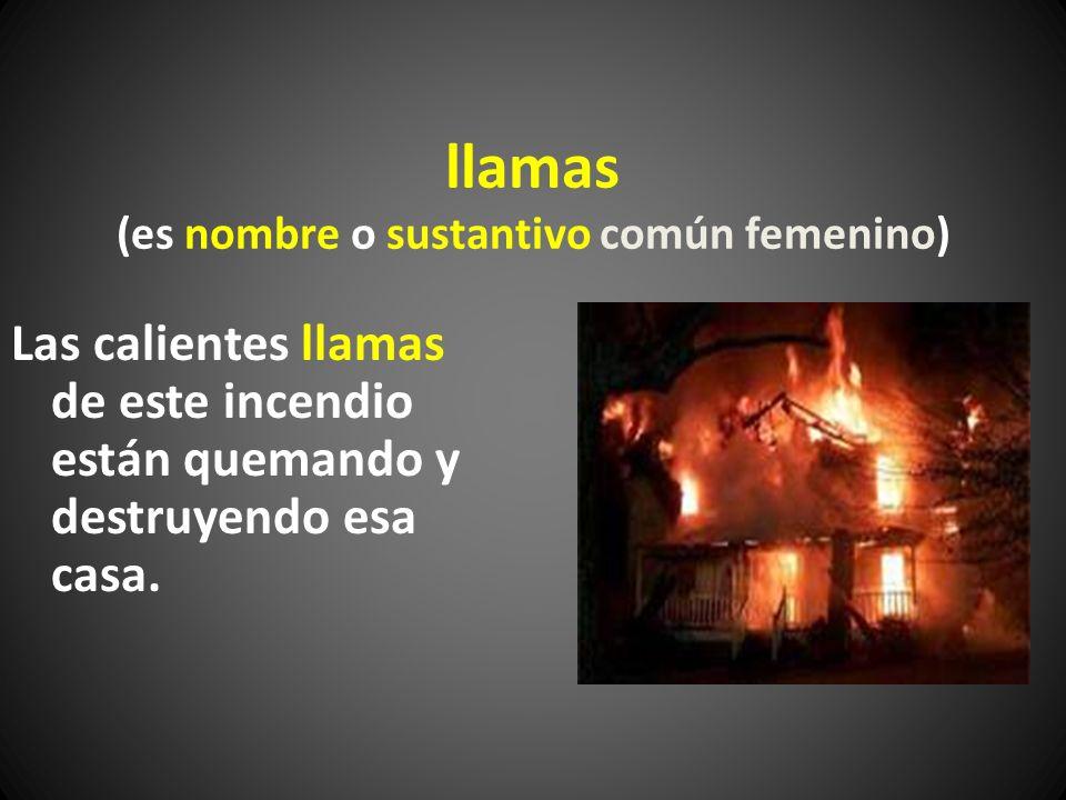 llamas (es nombre o sustantivo común femenino) Las calientes llamas de este incendio están quemando y destruyendo esa casa.